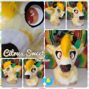 citrus-sweet-head